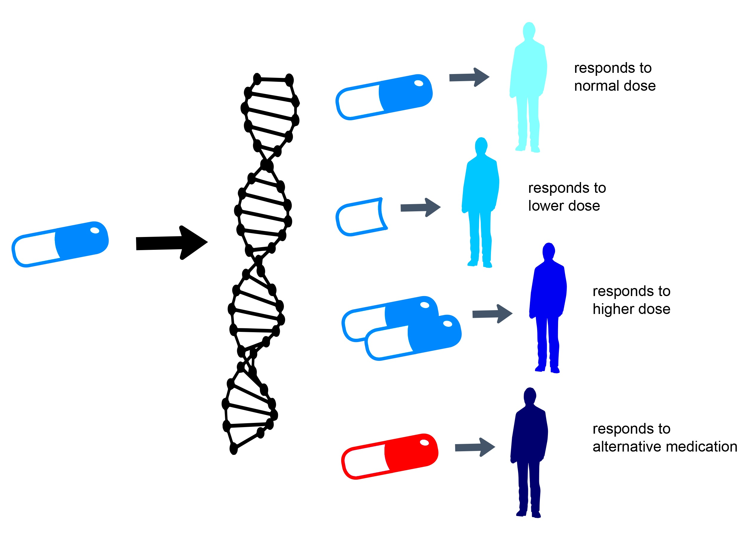 Part 6 Gene Testing To Inform Adhd Drug Therapy Adhd