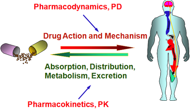 pharmacokinetics and ADHD