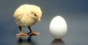 chicken_or_egg2-300x154