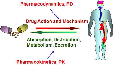 pharmacokinetics and ADHD