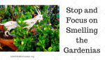 Can ADHD Affect Sense of Smell?
